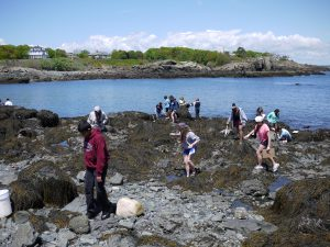 Marine Science Center Tidepooling and Tour
